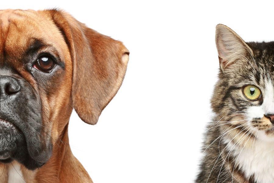 Кот или собака - какого питомца взять ребенку