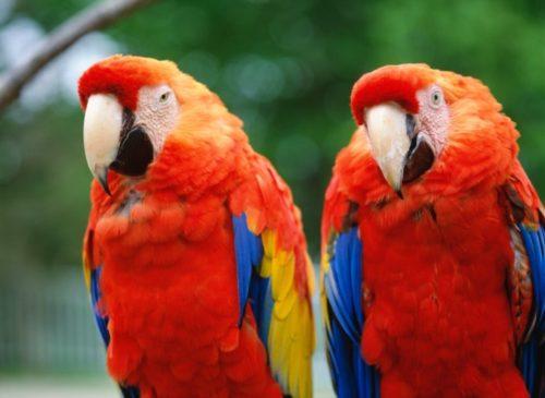 Попугаи в Сингапурском зоопарке