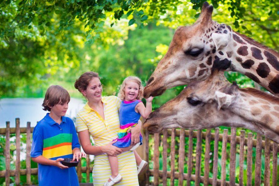 Зоопарк и дети