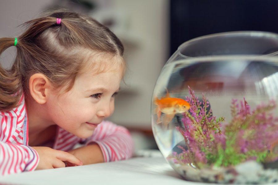 аквариум и ребенок