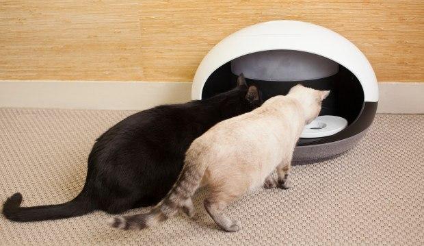 Приспособление для кошек с датчиком дозирования пищи