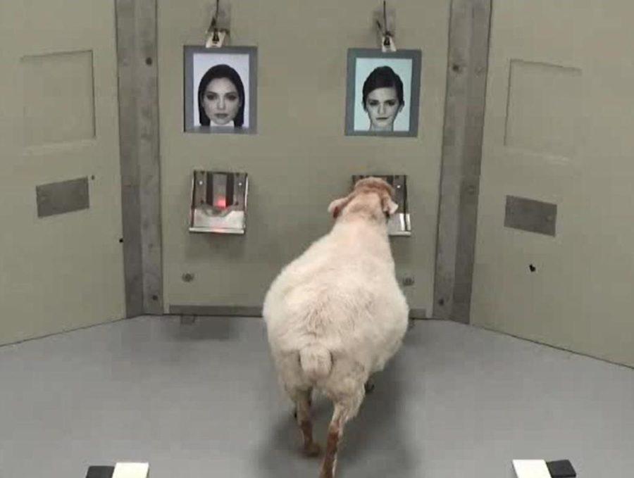 овцы и Распознавание лиц