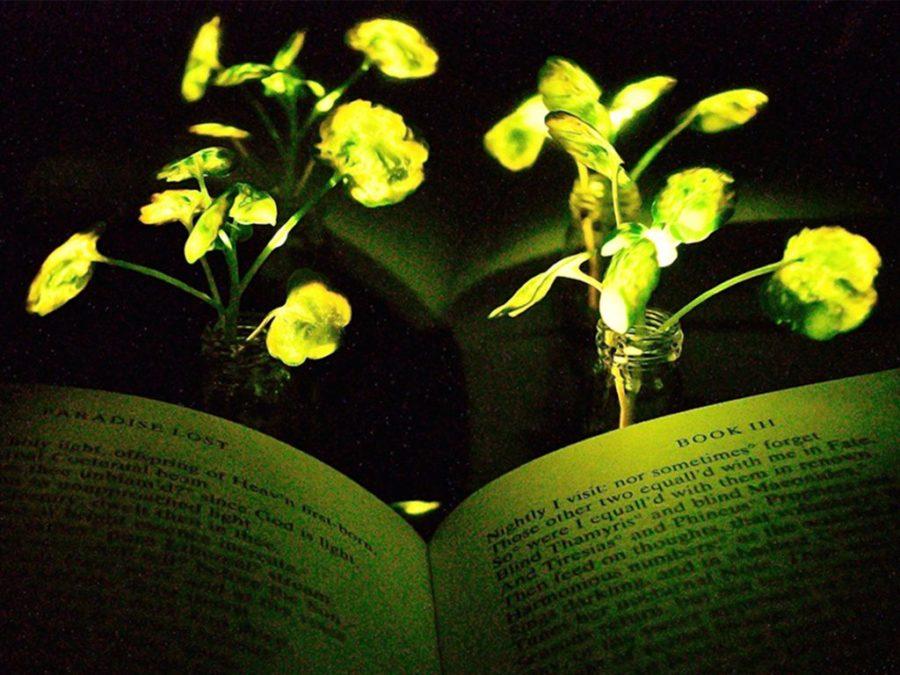 Люминесцентные Растения