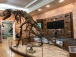 Динозавр и магнитная доска для пазлов